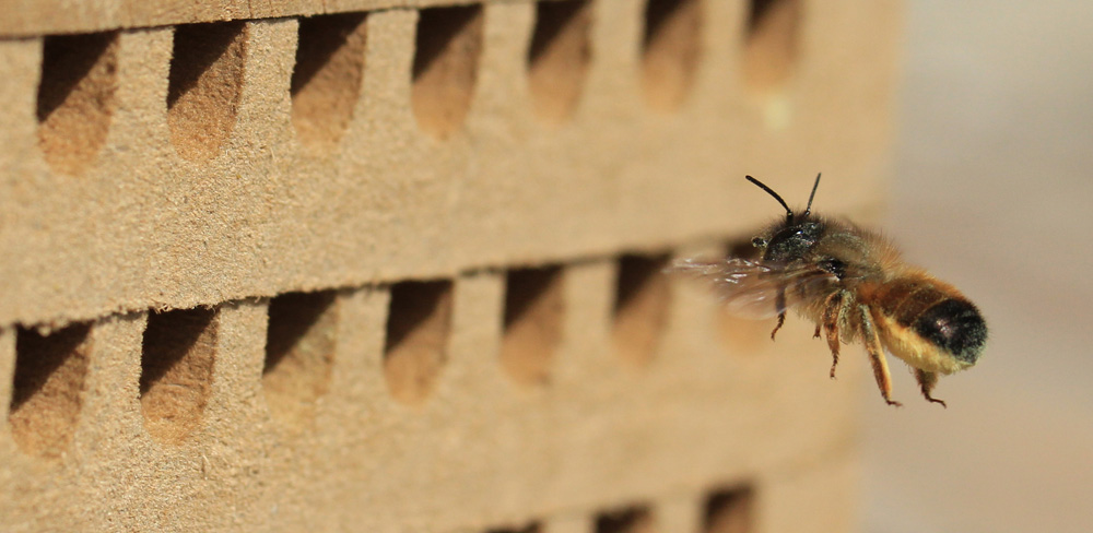 es summt und brummt behausungen f r insekten bauen. Black Bedroom Furniture Sets. Home Design Ideas