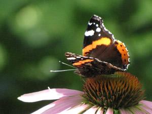 die schmetterlingskiste lepidoptera die bl tenfee f r kitas. Black Bedroom Furniture Sets. Home Design Ideas